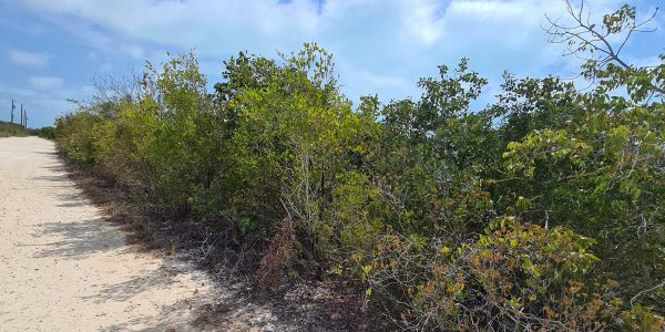 Long Bay Land For Sale Turks Caicos